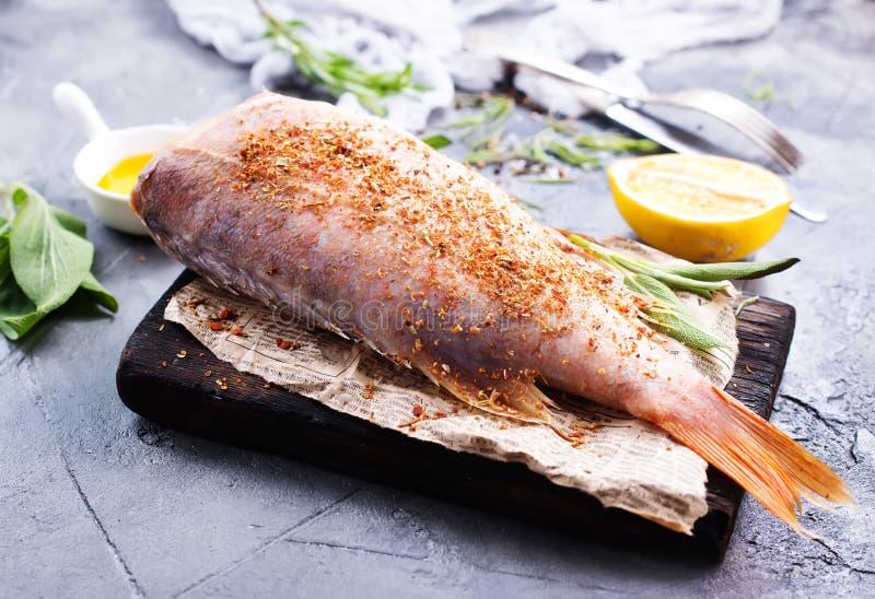 Rohe Fische lizenzfreies stockfoto