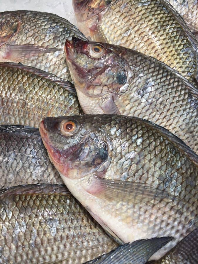 Rohe Fische auf Eis stockfoto