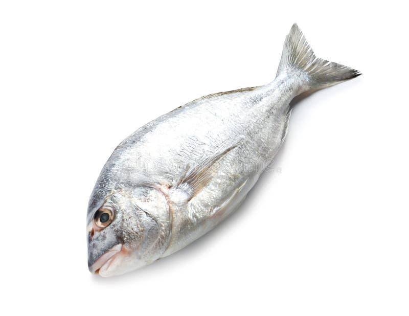 Rohe Fische auf weißem Hintergrund Naturkosthoch stockbilder