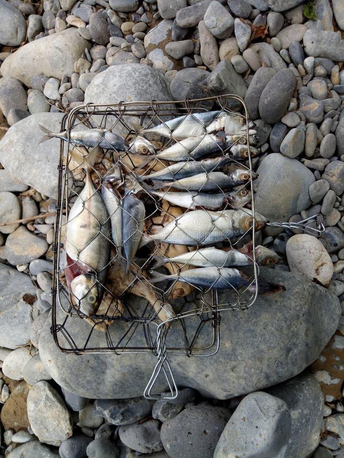Rohe Fische für draußen grillen lizenzfreies stockfoto