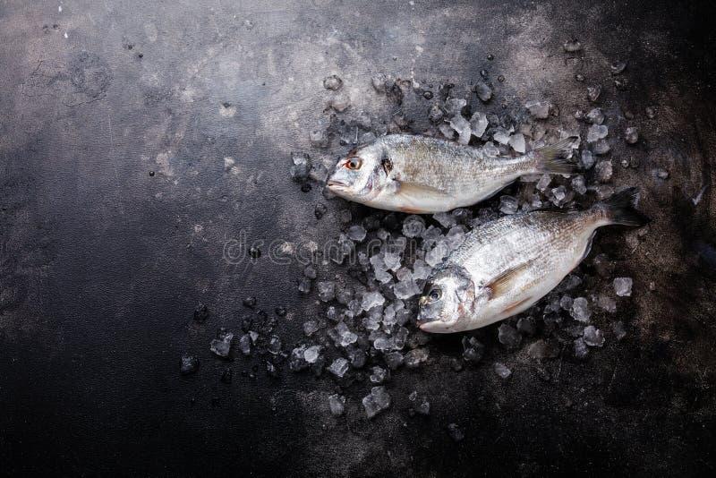 Rohe frische Fische Dorado auf Eis stockbilder