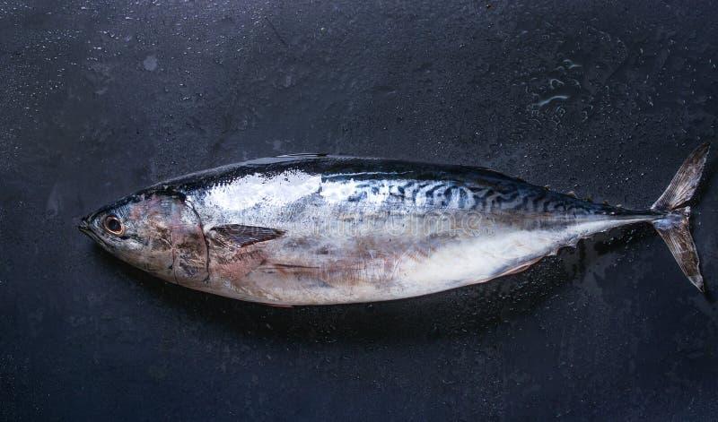 Rohe frische Thunfische lizenzfreie stockfotografie