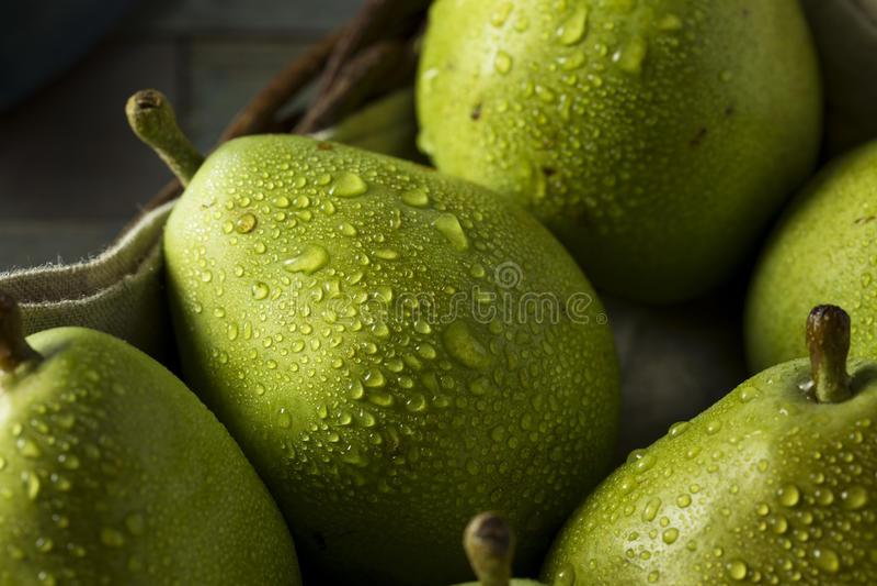 Rohe grüne organische Danjou-Birnen lizenzfreie stockbilder