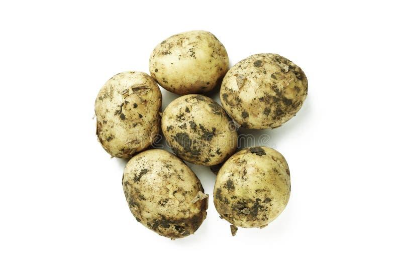 Rohe junge Kartoffel lokalisiert lizenzfreie stockfotos