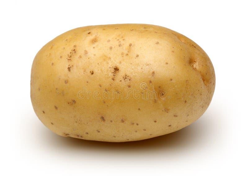 Rohe Kartoffel lizenzfreie stockfotos