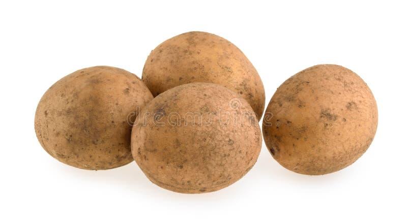 Rohe Kartoffel getrennt lizenzfreies stockbild