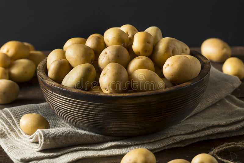 Rohe organische Baby-Goldkartoffeln stockbilder
