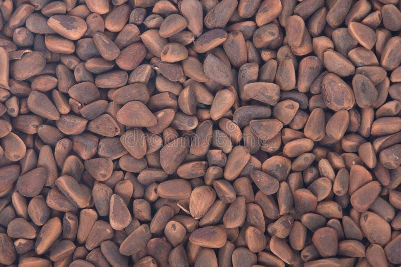 Rohe organische Kiefernnüsse in den Oberteilen lizenzfreie stockfotografie