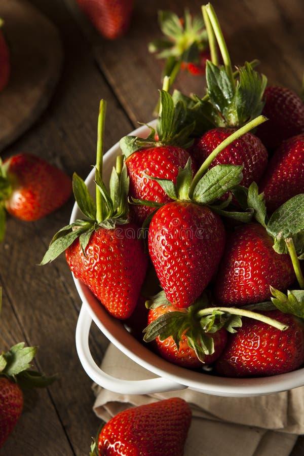 Rohe organische lange Stamm-Erdbeeren lizenzfreie stockfotografie