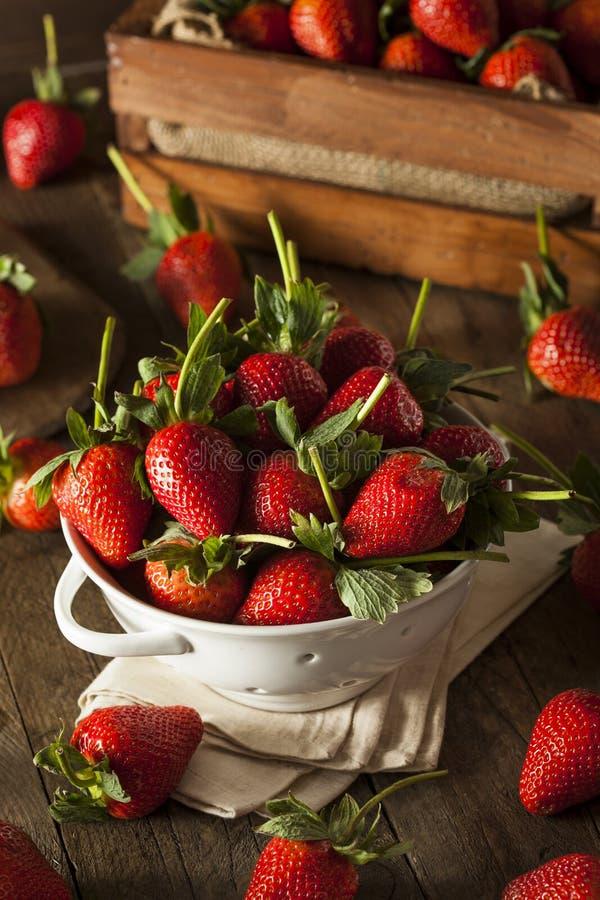 Rohe organische lange Stamm-Erdbeeren stockfotos