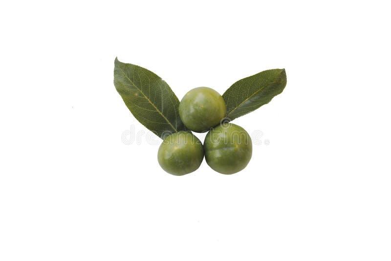 Rohe Pflaumengruppe Natureal-Grüns mit Blättern in Asien-Saisonfrucht auf weißem lokalisiert lizenzfreie stockfotografie