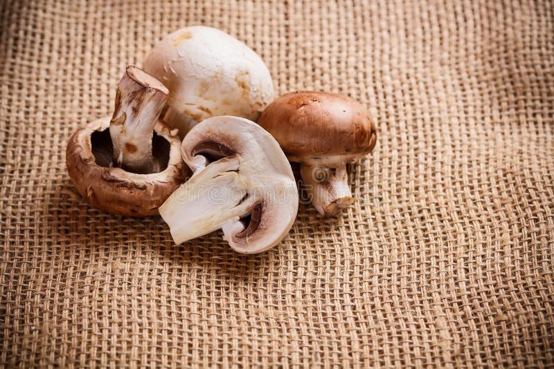 Download Rohe Pilze stockfoto. Bild von vorstand, gesundheit, pilz - 27729790