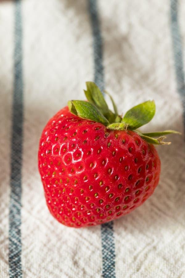 Rohe rote organische Erdbeeren stockfotos