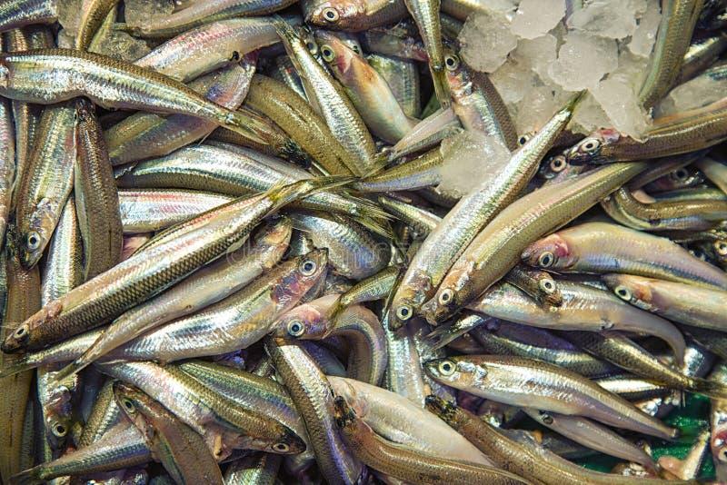 Rohe Schmelzfische im Speicher stockfotos