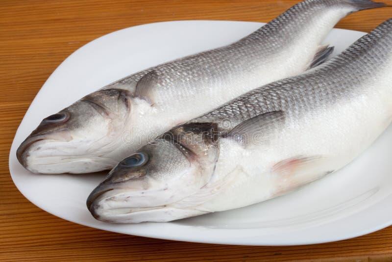 Rohe Seebarschfische lizenzfreie stockfotos