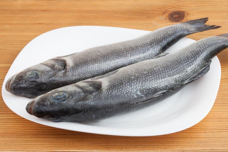 Rohe Seebarschfische stockfoto