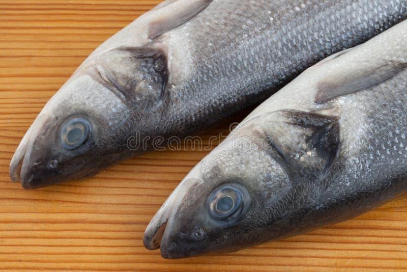 Rohe Seebarschfische lizenzfreie stockfotografie