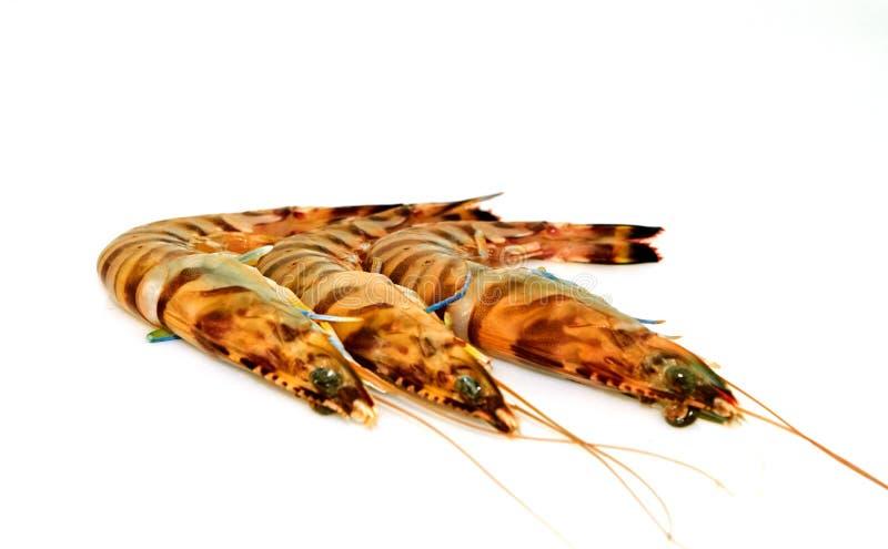 Rohe Tigergarnelen lokalisierten stockbilder