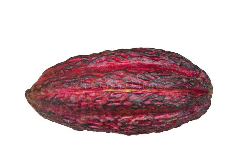 Rohe, ungeöffnete Kakaofrucht, Quelle aller Schokolade stockbilder