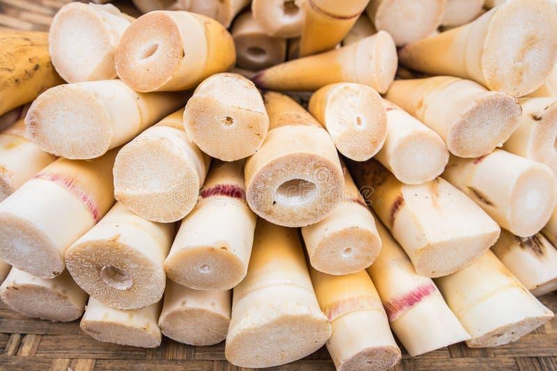 Roher Bambusschoß lizenzfreies stockbild
