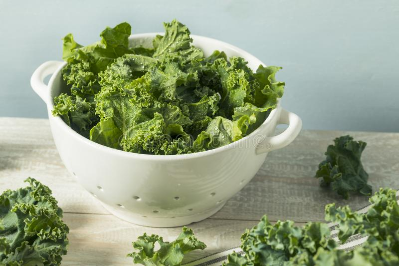 Roher grüner organischer Grünkohl stockbild
