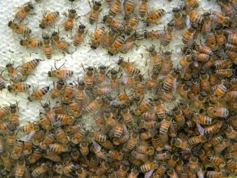 Roher Honig lizenzfreie stockbilder