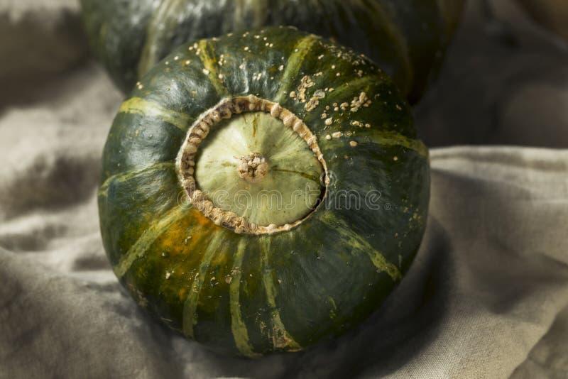 Roher organischer Butterblume-Kürbis stockfoto