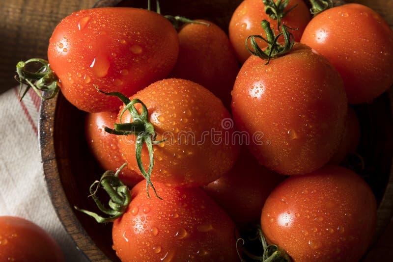 Roher roter organischer Roma Tomatoes stockfoto