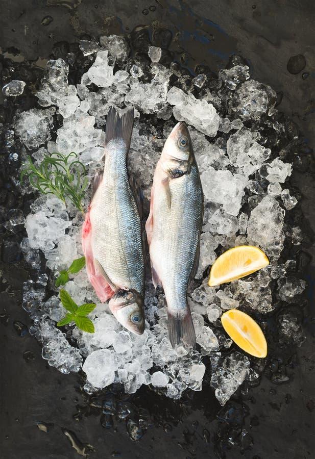 Roher Seebarsch mit Zitrone und Rosmarin auf abgebrochenem Eis über dunklem Steinhintergrund lizenzfreie stockbilder