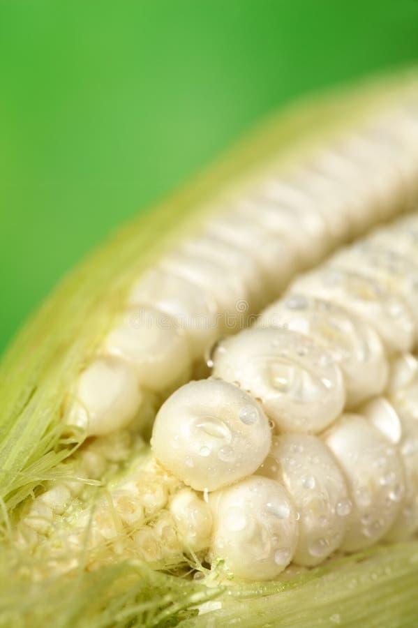 Roher weißer Mais lizenzfreie stockbilder