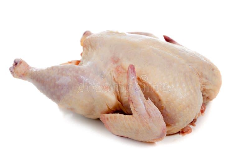 Rohes, vollständiges Huhn auf einem weißen Hintergrund lizenzfreie stockbilder