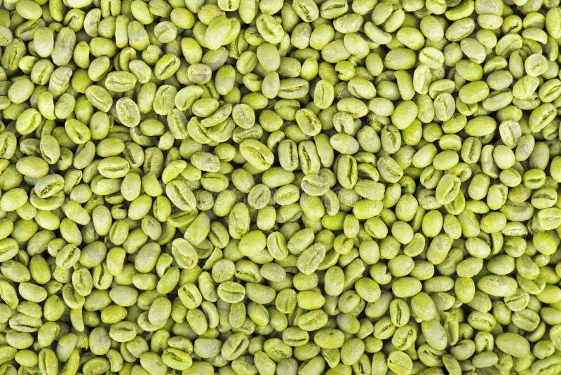 Rohkaffeebohnenhintergrund Mittlere grüne peaberry Kaffeebohnen lizenzfreie stockfotos