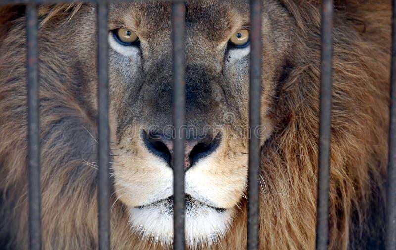 Roi derrière des bars. image libre de droits