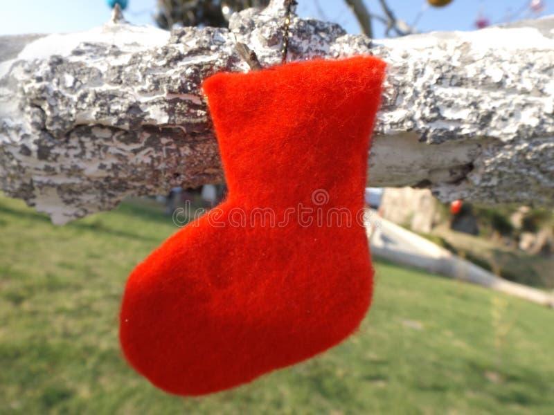 Roja de Botita fotos de archivo libres de regalías