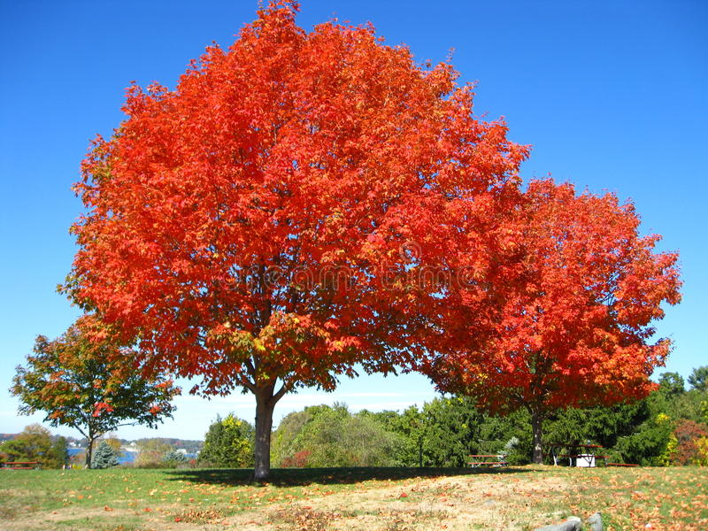 Rojo anaranjado Autumn Trees Fall en Kittery Maine imagen de archivo