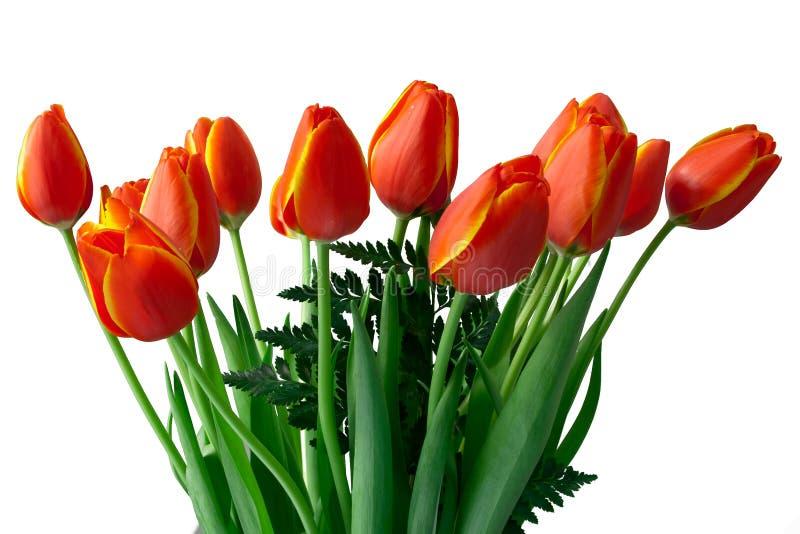 Rojo con los tulipanes amarillos foto de archivo