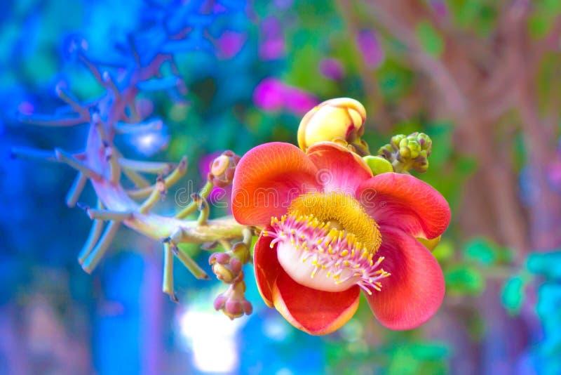Rojo de la flor foto de archivo