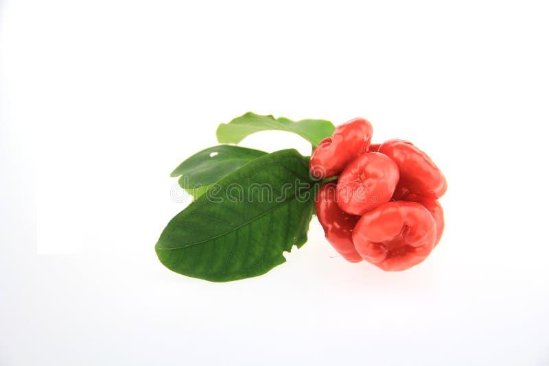 Rojo del color de la manzana de Java fotos de archivo