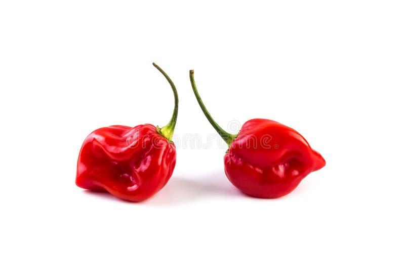 Rojo del habanero en el fondo blanco foto de archivo libre de regalías