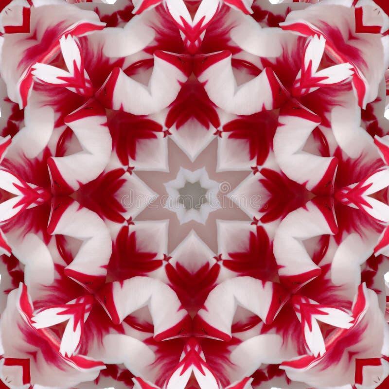 Rojo - primer de la macro del centro de la flor blanca fotografía de archivo
