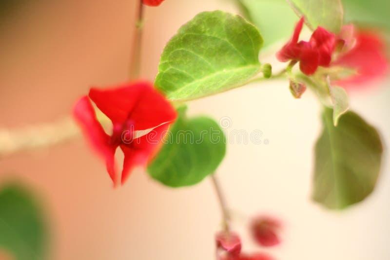 Rojo y verde fotografía de archivo