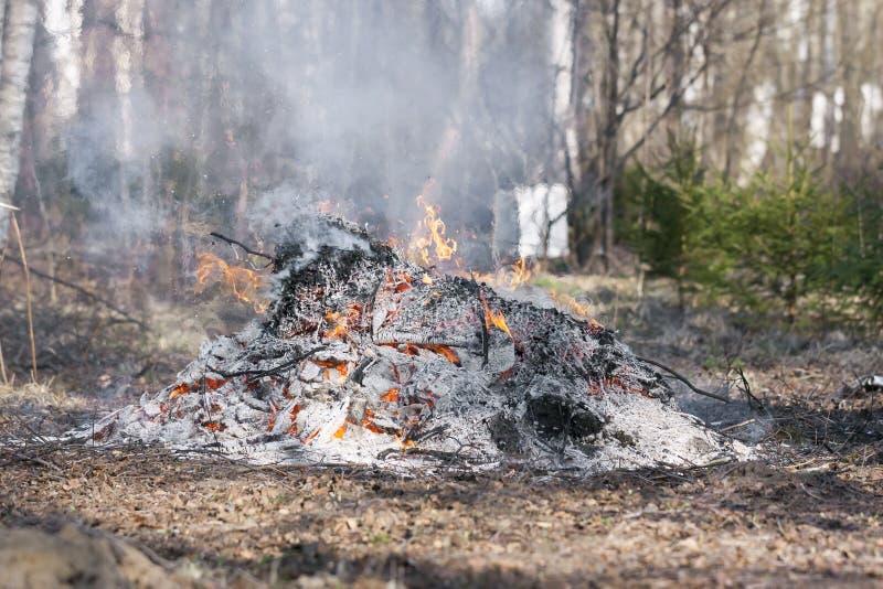 Rokend vuur bij bos stock fotografie