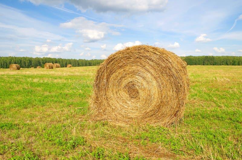 Role a palha da colheita no campo imagem de stock