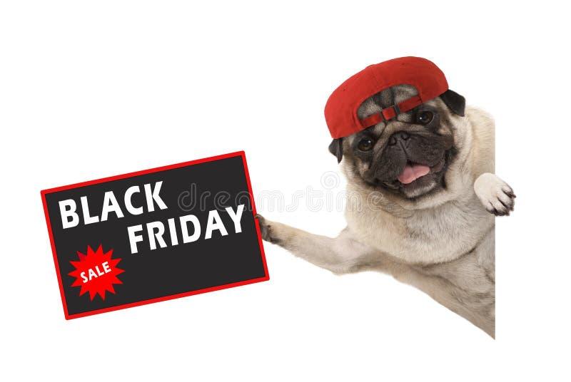 Rolic-Pughündchen mit der roten Kappe, Verkaufszeichen mit Text Black Friday halten und seitlich hängen von der weißen Fahne stockfoto