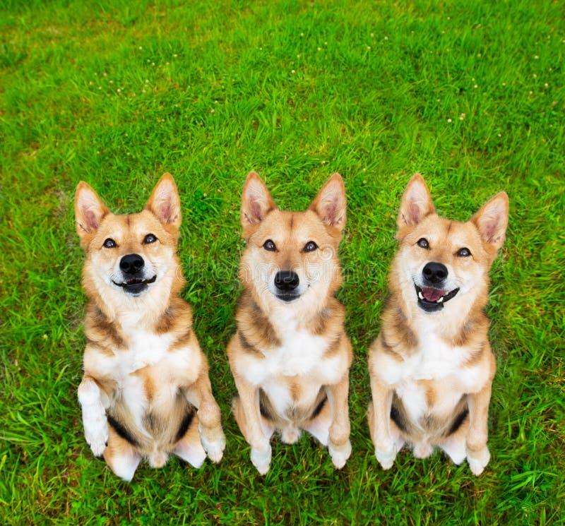 Rolig bedjande hund arkivbilder