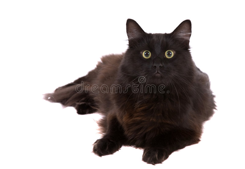 rolig catface arkivfoto