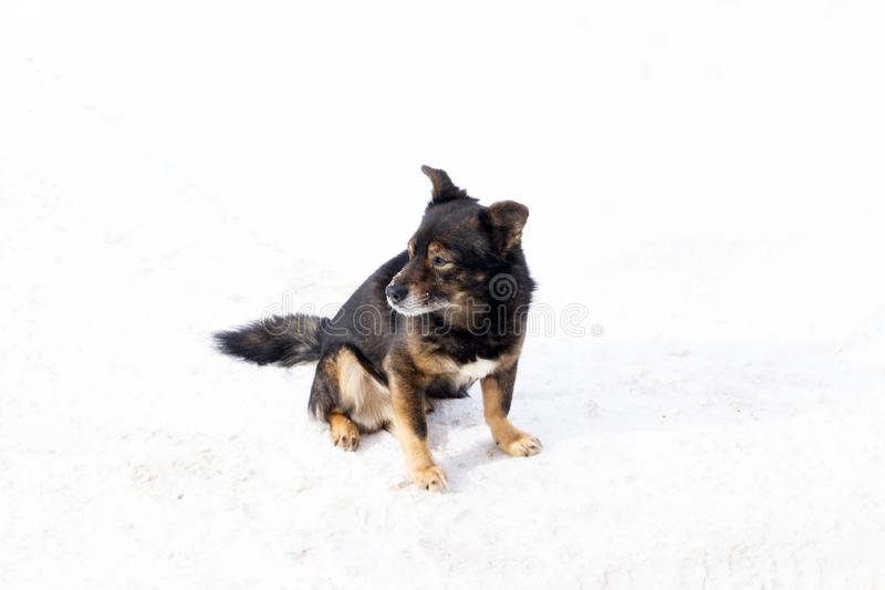 Rolig chihuahuahund som poserar på en strand i solglasögon fotografering för bildbyråer