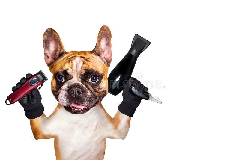 Rolig clipper för håll för groomer för barberare för fransk bulldogg för hundingefära och hårtork bakgrund isolerad manwhite arkivbilder