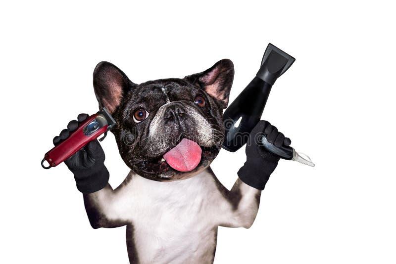 Rolig clipper f?r h?ll f?r fransk bulldogg f?r groomer f?r hundsvartbarberare och h?rtork bakgrund isolerad manwhite arkivbilder