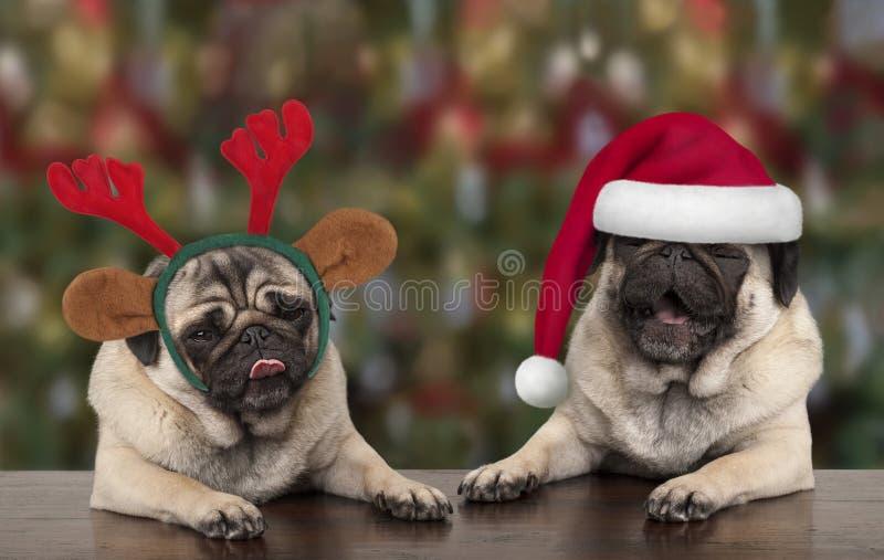 Rolig gullig hundkapplöpning för julmopsvalp som lutar på trätabellen, den bärande Santa Claus hatten och renhorn på kronhjort royaltyfria bilder
